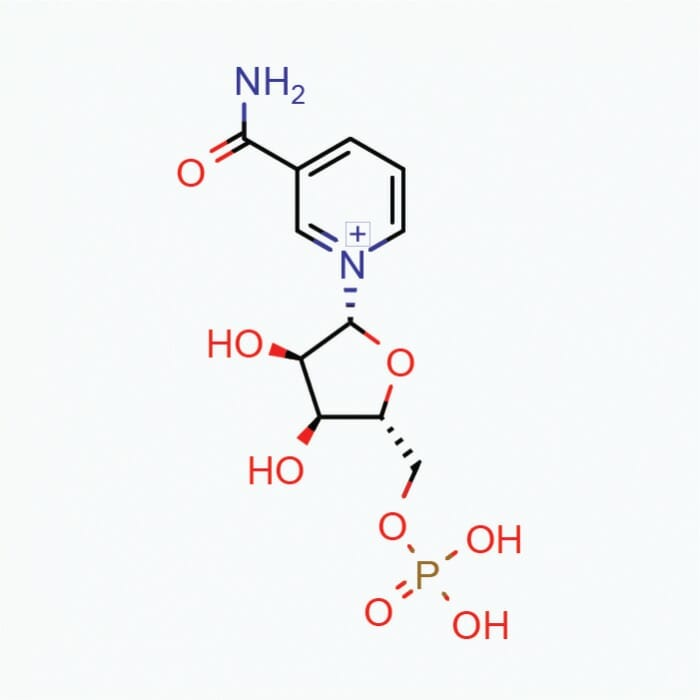 NMN (Nicotinamide Mononucleotide) – Powder, 10g