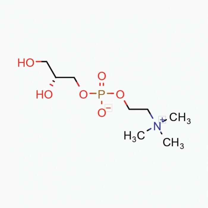 Alpha GPC 50% – Powder, 50g