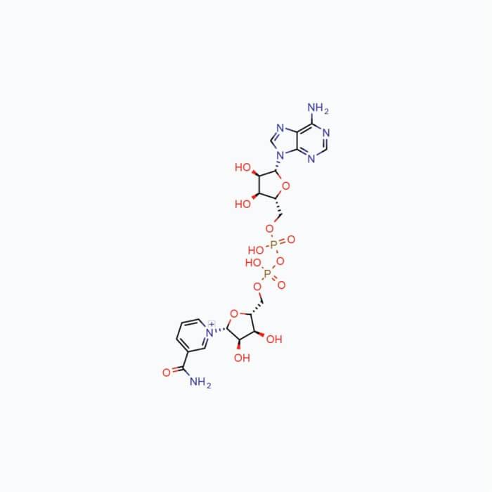 NAD+ (Nicotinamide Adenine Dinucleotide) – Powder, 10g